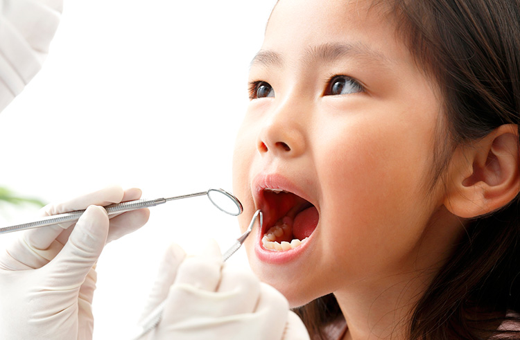 乳歯の特徴